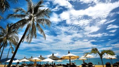 Beach palmier